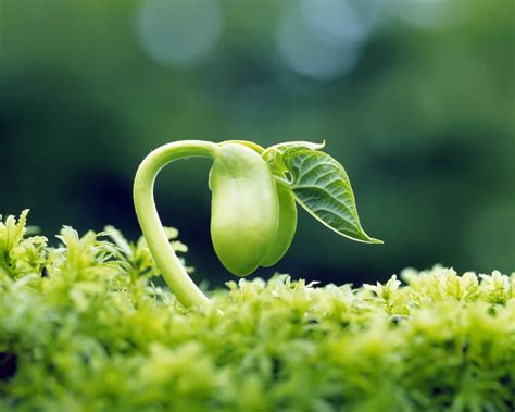 Life cycle of a plant - GreenMyLife - Anyone can Garden