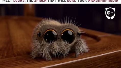 Meet the spider, Lukas, that will change your fear of