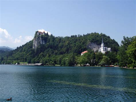 Bled – Wikipedie