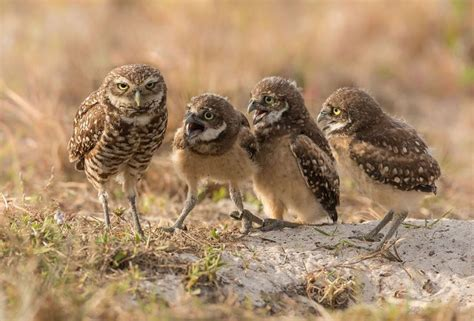 Pin by Dagmar on ANIMALS :-) | Comedy wildlife photography