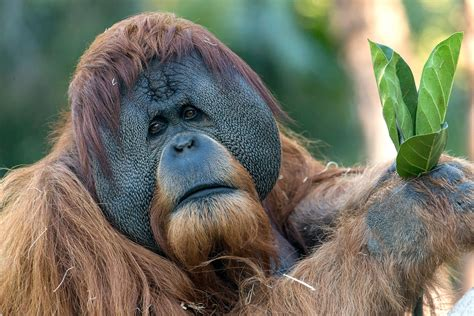 San Diego Zoo Discount Tickets and Skip The Line Pass