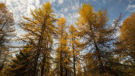 To save forests, cut some trees down, scientists say