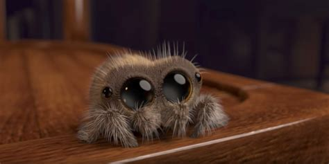 Lucas the Spider is YouTube's latest star with millions of